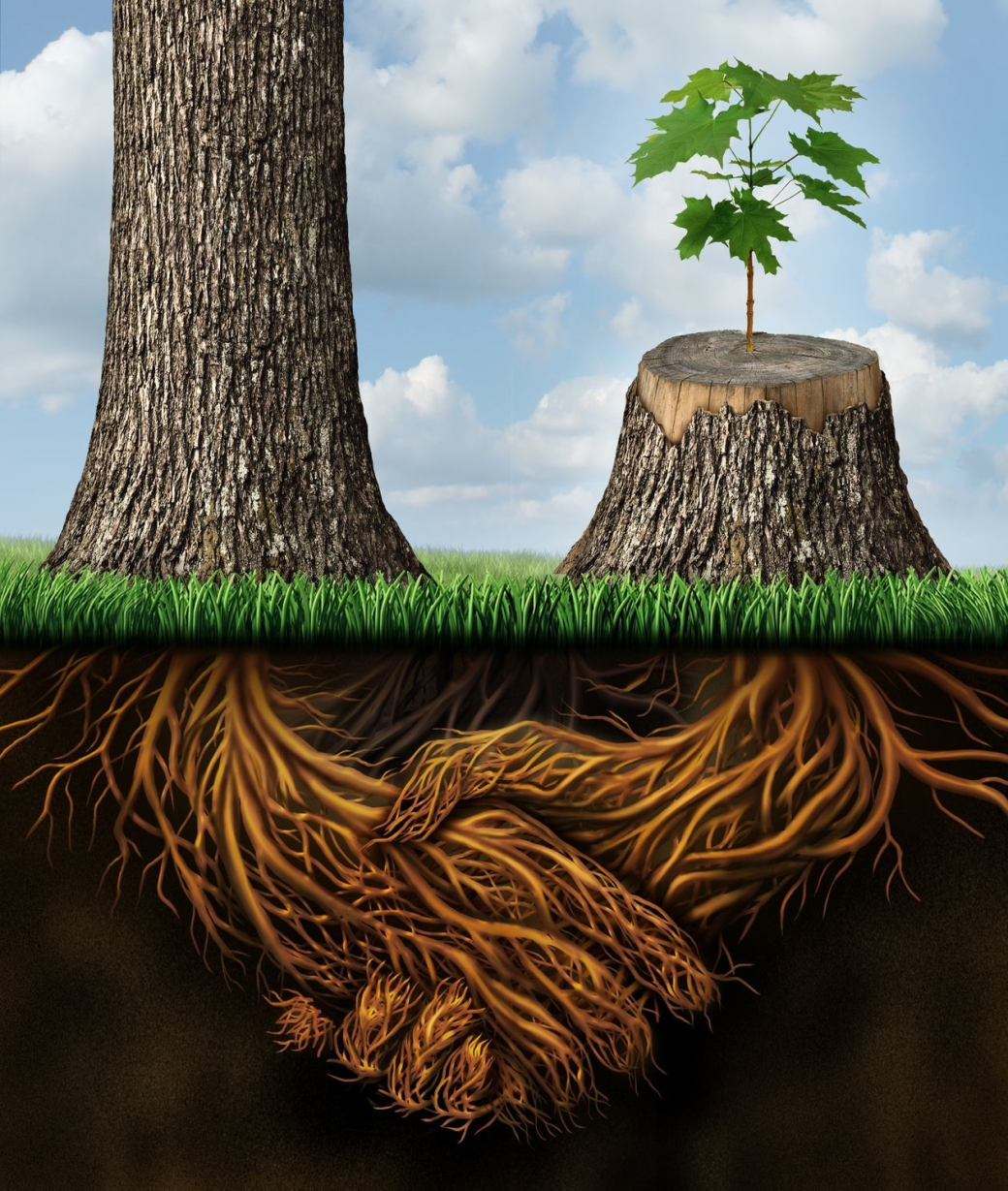 Root Tree Relationship